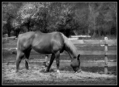 we can ride later (unonymous) Tags: horses horse cheval farm pasture hay stable equestrian lightroom flickrlovers