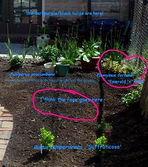 Little garden with labels (maggie_and_her_camera) Tags: maggieneely