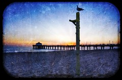 The Seagull at Sunset