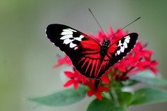 elegance (Dawn Ashley) Tags: flower macro butterfly wings florida bokeh coralsprings butterflyworld