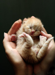 Bundle of joy (-ViDa-) Tags: new baby cute cat kitten small cutie tiny kittie babycat bestofcats