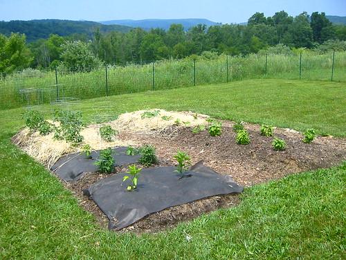 Lasagna Garden Beds
