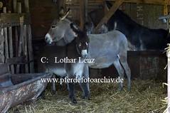 lz280704(25) (Lothar Lenz) Tags: deutschland esel 56812dohr