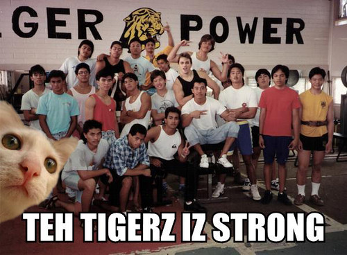 teh tigerz iz strong