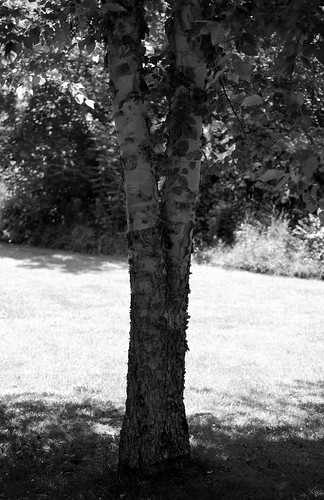 tree together bw