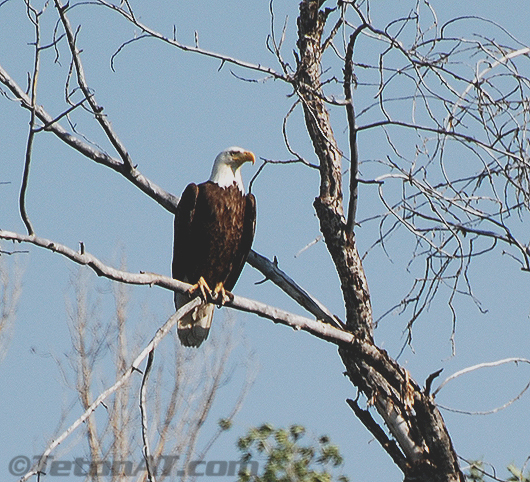 TetonAT.com Eagle 3