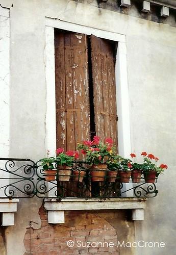 Eight Geraniums ~ Colour Photograph