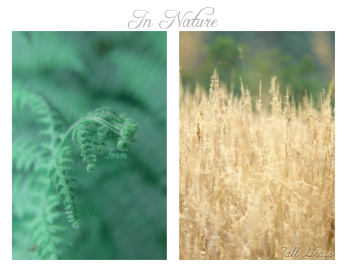 In Nature : Fern & Tall Grass