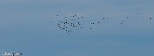 flying in the sky