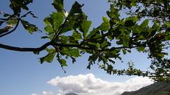33.陽光灑在樹葉上