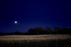 August Moon (thorvaala) Tags: bravo d200 bej mywinners abigfave infinestyle theunforgettablepictures betterthangood theperfectphotographer goldstaraward life~asiseeit spiritofphotography alwaysexc lightpainterssociety lesamisdupetitprince phvalue