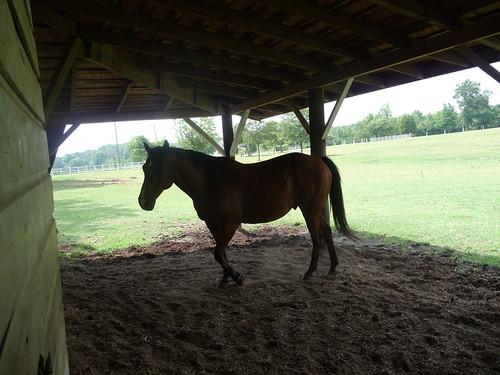 HorseFarm29.jpg by you.