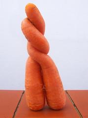 cenouras  (Marcus Vincius Martins-Jung) Tags: lumix raw riograndedosul vegetal taquara cenoura trashbit
