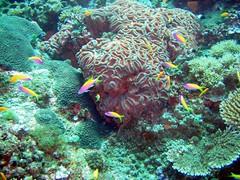 P7230333 (brittonpaul83) Tags: africa tanzania paul island scuba diving britton pemba