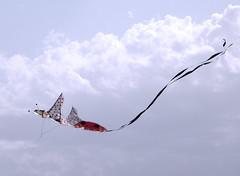 Coccinella Volante (Piero Gentili) Tags: sky kite cute canon giant fly flying nice mare shot best kites cielo canona1 gigante piero 20051 vola aquiloni volare aquilone pierpaolo gentili lancio lanciare sonyalpha350 piero20051 pierogentili gentilipiero gentiligentili pierpaologentili gentilipierpaolo