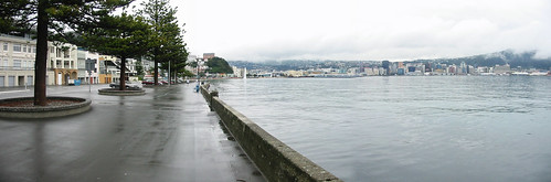Stitched Oriental Bay wellington