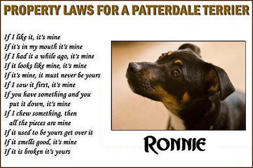 patterdale laws of property