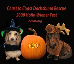 Honey Witch and Teddy Moose (Doxieone) Tags: rescue dog fall dogs halloween pumpkin group dachshund 2008 halloweenfall2008set