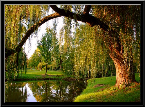 descargar willow tree