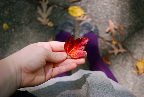 red leaf and purple tights