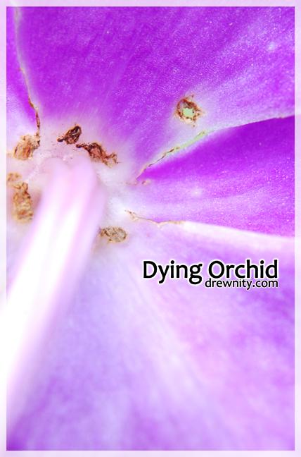 orkid1g