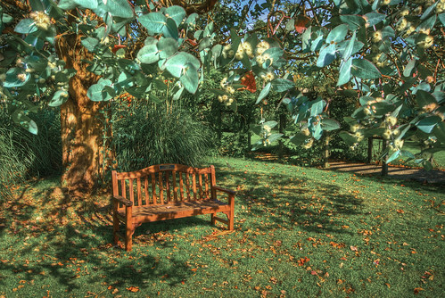 The Seat Under The Gum Tree