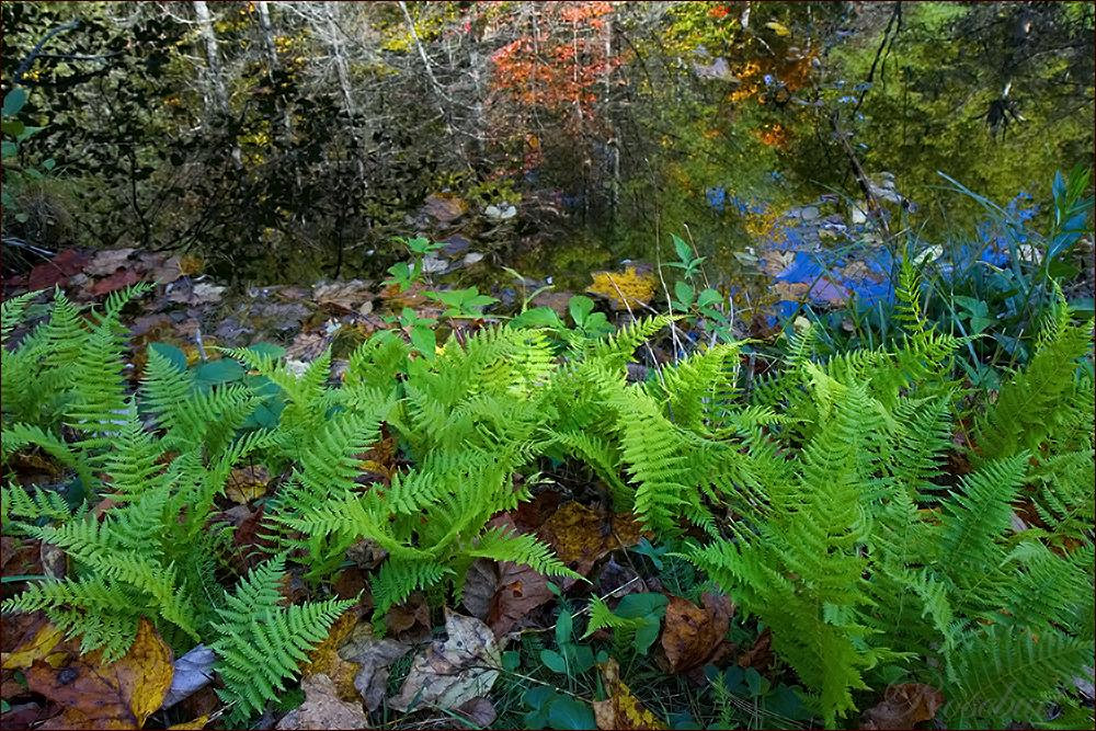 pond|ferns ©2008 RosebudPenfold