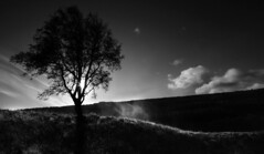 alone at sunrise bw (Paddy McDougall) Tags: bw mist tree canon scotland calvin golddragon 40d mywinners theunforgettablepictures artlegacy