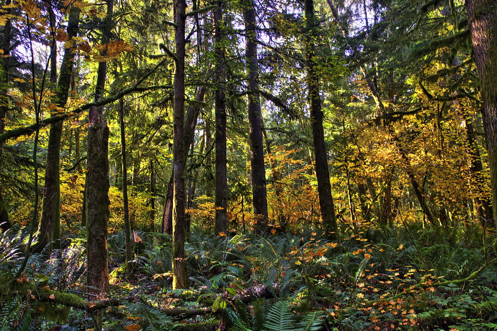 yellow-forest-glade_5831