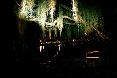 bloqueador (capgun holdups) Tags: lake bench moss dying hugetree