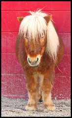 (Gdnght1) Tags: red animal farm small indiana pony stable theunforgettablepictures thebestofday gnneniyisi