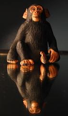 monke (Maʝicdölphin) Tags: macro reflection canon toy monkey mirror powershot a590