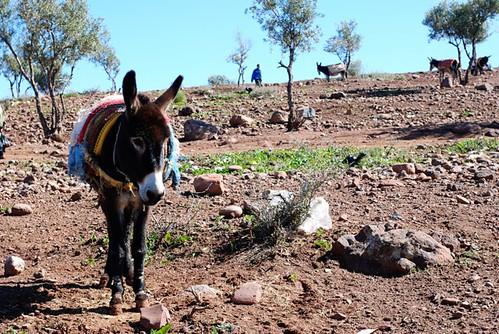 Donkey Last.jpg