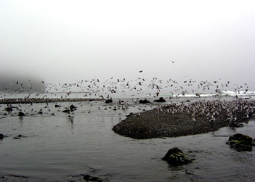 Pigeon central (Carmanah Creek)