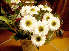 nice white flowers in a glass jar PICT8015b RS by Seven Pillars Lord Abbaddon