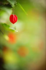 (k-ko) Tags: red green film nature heart bokeh elitechrome om2  ebx natureycrap