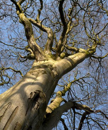 Beach tree 15Nov08