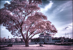 In The Summer of Love... (darth_bayne) Tags: pink tree love philadelphia ir couple gazebo summertime artmuseum benches hdr boathouserow cityofbrotherlylove hoyar72 sigma1850mm treeoflove