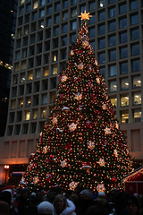 Chicago's Christmas tree (by hoopskirts)