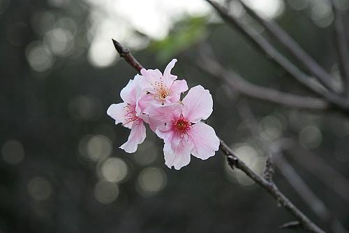 20081130Blossom