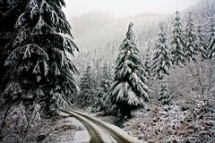 snow (Matt Abinante) Tags: snow oregon pacificnorthwest buttecreek abiqua crookedfingerroad