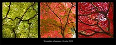 Autumn Lines and Colour Triptych (le-spikey) Tags: pink autumn red abstract green leaves nikon triptych colours stu branches gimp westonbirt 1870mm meech d40