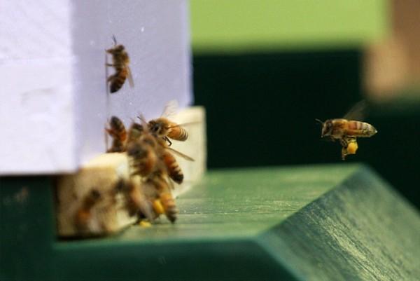 beekeeping 212 (600 x 401)