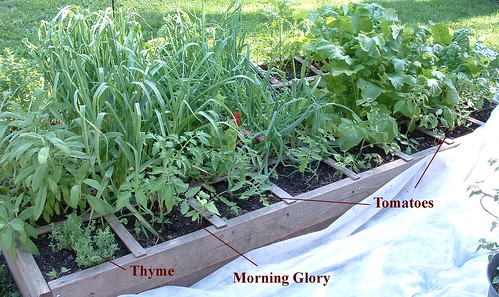 North Side of West Bed - May 24