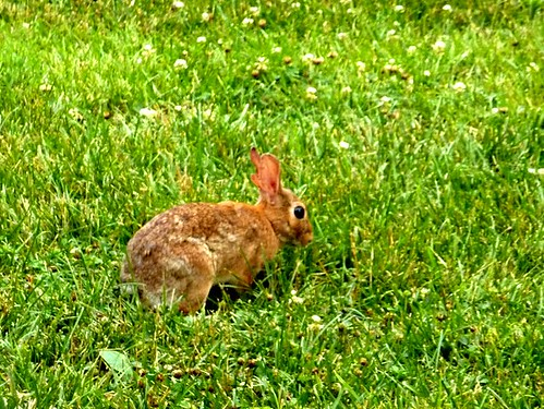 Bunny at Strathmore!