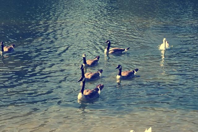 Legg Lake