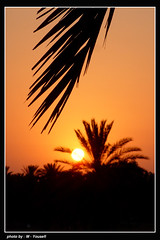 PALM  (m_yousefi) Tags: sunset sun set iran   bushehr canon30d  flickrlovers