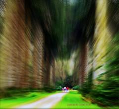 """YOU SAY YOU WANT TO RUN AWAY"" (Edward Dullard Photography. Kilkenny, Ireland.) Tags: wood trees kilkenny ireland forest erin photographic irland eire woodstock magical emeraldisle enchanted ierland eireann dullard kps mywinners anawesomeshot edwarddullard goldstaraward kilkennyphotographicsociety societyedward"