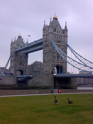 Geese near Tower Bridge
