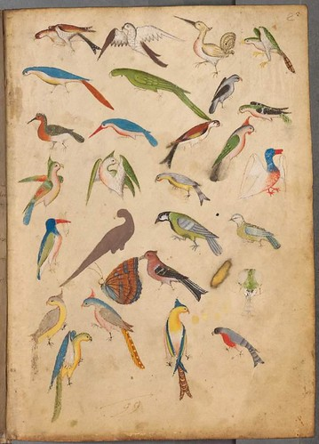 Bird sketches for illuminated manuscript